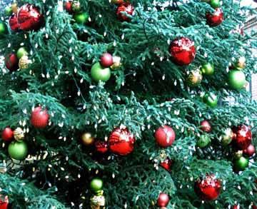 City tree 12-08SMALL.jpg