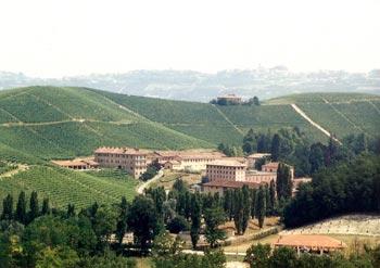 Monforte view downhill nebbiolo mendoza malbec gamay beaujolais barolo