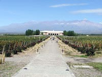 Salentein vineyard view 1.jpg