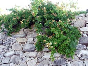 Tablas Creek wall.jpg