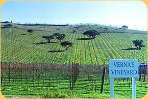 Vernas vineyard.jpg