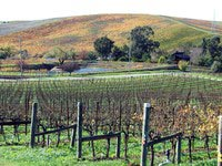 carneros-late-fall.jpg
