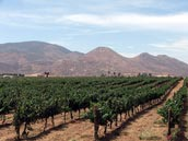 guadalupe valley vineyard.jpg