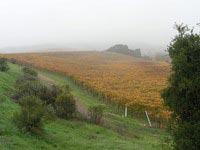 vinyard1.jpg